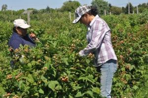 Farmworker COVID-19